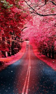 pink-trees-live-wallpaper-528435-2-s-307x512.jpg